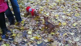 Знакомство собаки с собакой / Смешные собаки видео до слёз бесплатно ютуб
