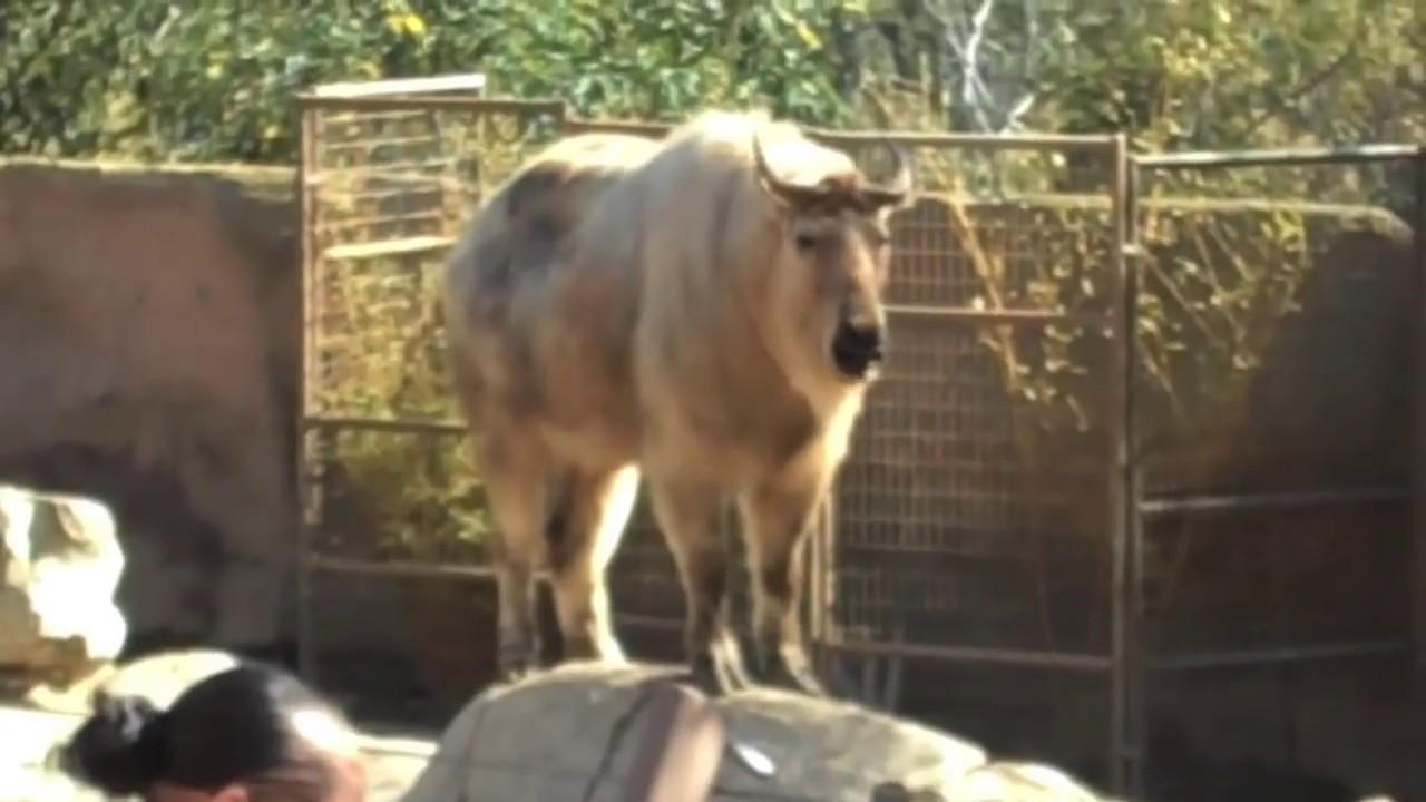 Baboon Butt MONKEY BUTT - YouTube