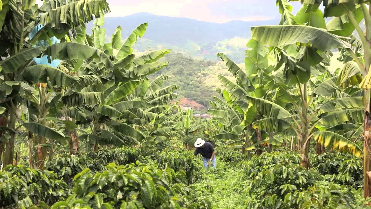 nescafe plan Engagement im kakaoanbau von kitkat über smarties bis zu after eight – lisa giesbrecht wacht darüber, dass die ambitionierten ziele des cocoa plans bei nestlé.