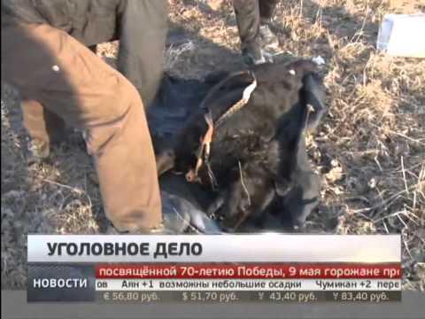 животных хабаровске убийцы фото в
