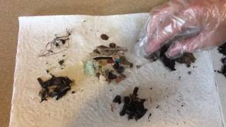Inside the Bolus: Laysan Albatrosses and Plastic Ingestion – May 26, 2017