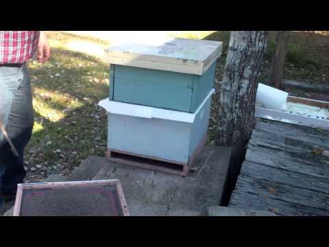 How To Merge Honey Bee Colonies