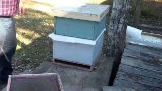 How To Merge Honey Bee Colonies