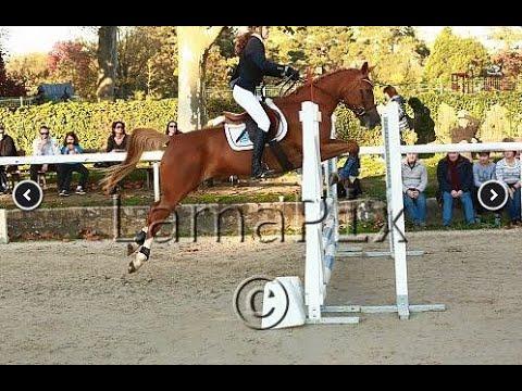 Concours à la Société d'Équitation de Paris
