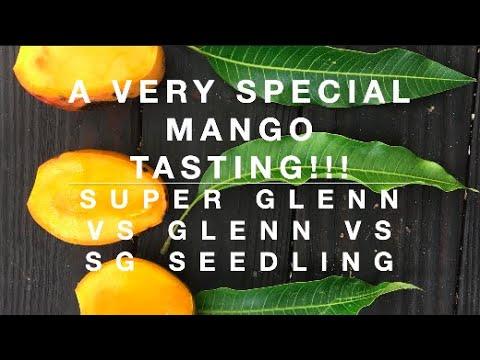 A VERY SPECIAL MANGO TASTING!!! SUPER GLENN vs GLENN vs Super Glenn seedling