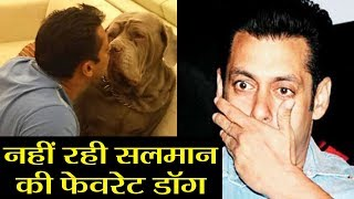 Salman Khan's favorite dog My Love passes away   वनइंडिया हिंदी