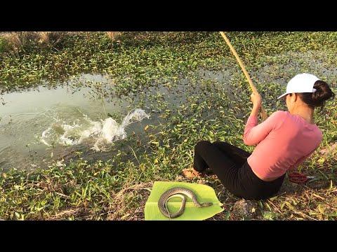 FISHING Challenge with
