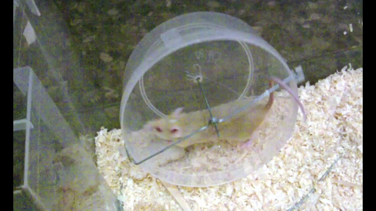 how to make a mousehamster wheel out of wire and a tupper
