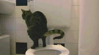 vuclip Cat Taking a Huge Shit On The Toilet
