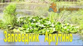 видео Туры в Аркутино (Болгария) из Москвы, цены на путевки и отдых в Аркутино на 2018 год все включено от туроператора Coral Travel
