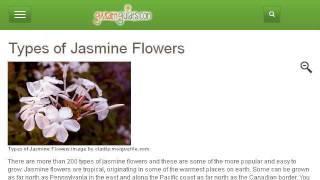 Varieties Of Jasmine Shrubs