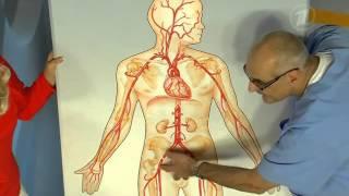 Аневризма брюшной аорты. Болезнь курильщиков