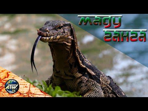 Речное сафари по Маду Ганга | Вараны, мангровые заросли и буддийский храм XIX века | Шри-Ланка