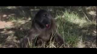Животные-алкаши)))