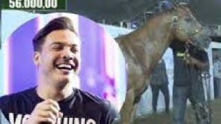 Wesley Safadão Compra Cavalo Por Mais De R 2 Milhões De Reais Em Leilão
