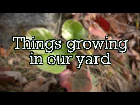 THINGS THAT GROW IN ALASKA