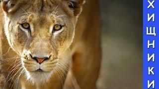 Животные, Лев, Тигр и другие хищники, для детей,видео про животных