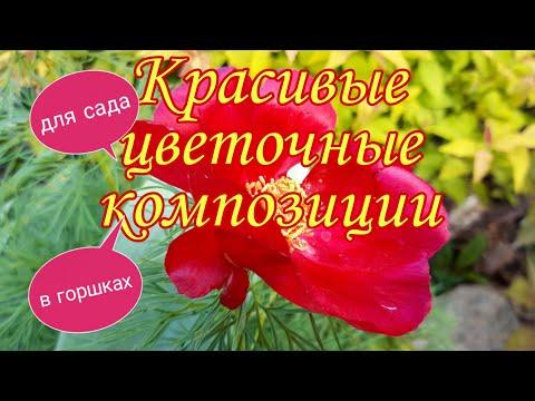 Вопрос: Какие растения подойдут для цветочно- овощной композиции?