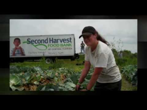 Gleaning - Farm to Food Bank