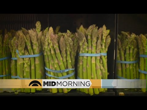 Internet Goes Nuts Over Report Linking Asparagus, Cancer
