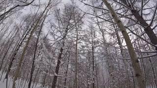 ニセコスノーハイク20171215am