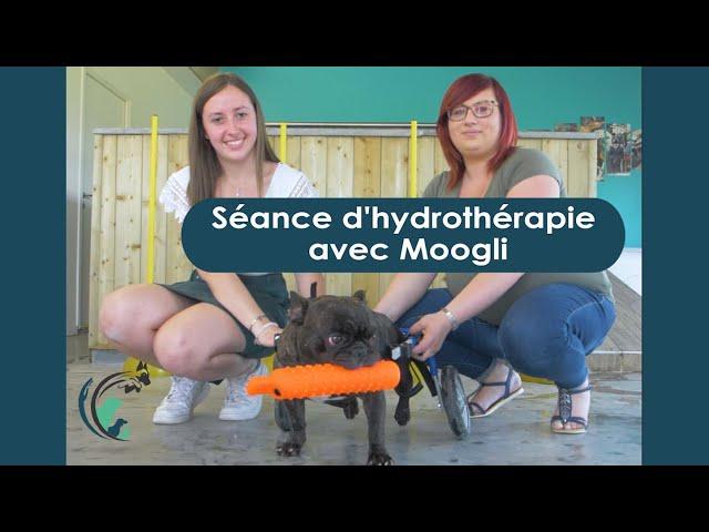 Hydrothérapie avec Moogly   Clinique vétérinaire Saint Roch