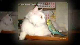 приколы про кошек яички ля ля ля