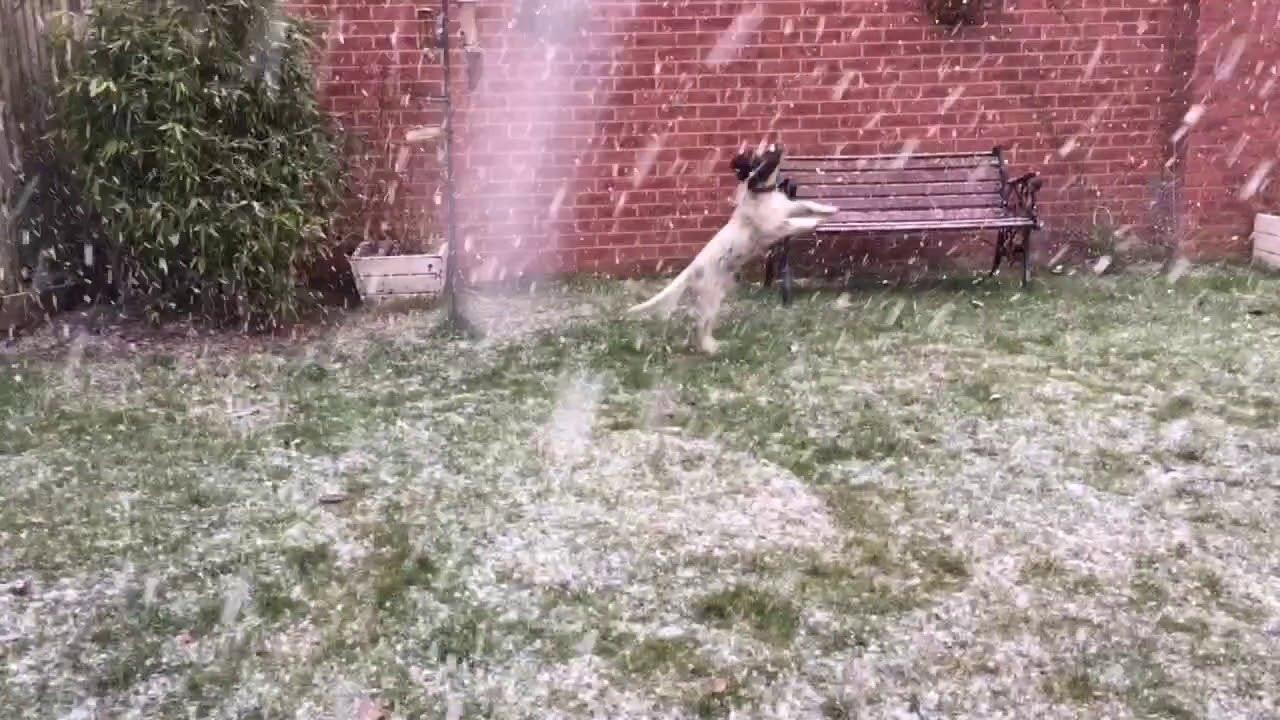 Puppy Spaniel Discovers Snow Viralhog