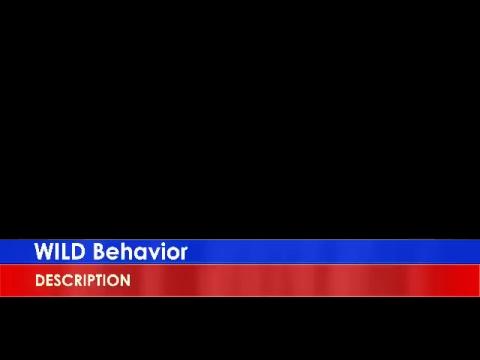 Wild Behavior Live Stream