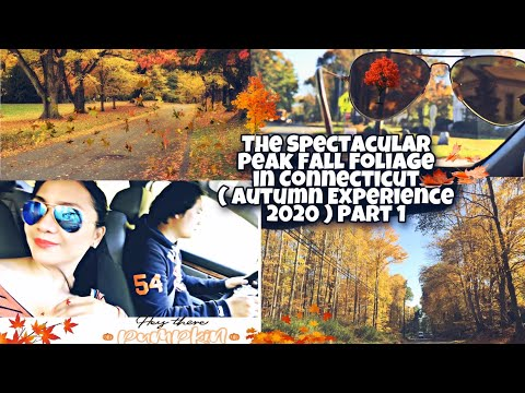 THE SPECTACULAR PEAK FALL FOLIAGE IN CONNECTICUT 2020 // AUTUMN EXPERIENCE PART 1 // YNARE DON