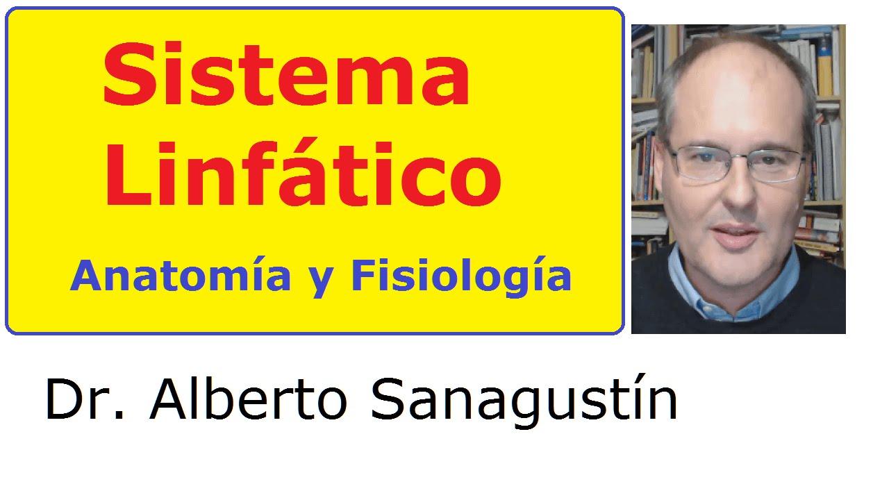 SISTEMA LINFÁTICO ✅ explicado FÁCIL: anatomía y fisiología - YouTube