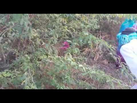 21 Jan DP Sagwara Murder 01