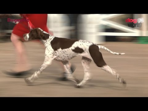 National Gundog 2016 - Best in Show FULL