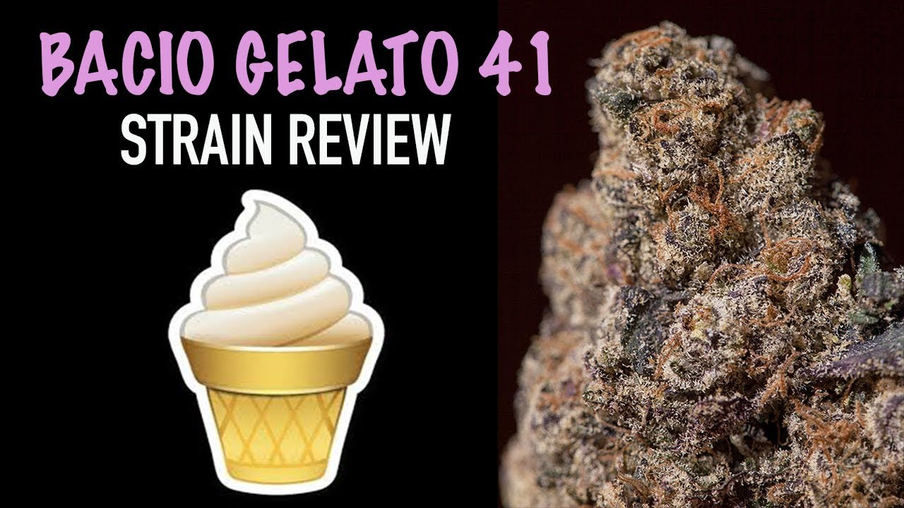 Strain Review: Bacio Gelato #41 Girl Scout Cookie Flower