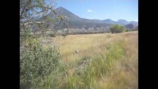 Glenwood Springs Colorado The German Shorthaired Pointer