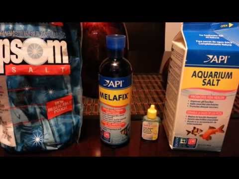 Medicating Your Fish And Rift Lake Cichlid Buffer