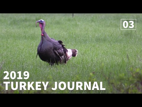Washington Turkey Hunt PUBLIC LAND GOBBLER - 2019 Turkey Journal |  Ep. #3 | Washington |