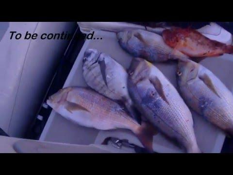 Spearfishing, Podvodni ribolov, Croatia, Dentex Dentex VIII, 2015