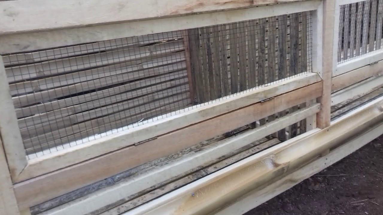 Kandang ayam joper untuk 100 ekor cukupmodal 250rb - YouTube