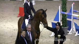 Horses ( Senzus-Julia)