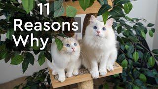 ¿Deberías tener dos gatitos en lugar de uno? El mayordomo del gato