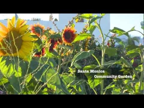 Santa Monica Community Garden, A film by Mona Gale