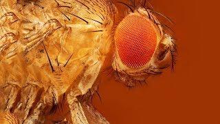 5 Видов животных, которых собрались уничтожить