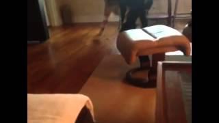 Poodle Tries To Rape A Girl In Bikini