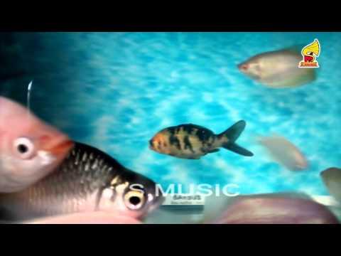 Milk white koi carp aquarium fish youtube for Reproduction carpe koi aquarium