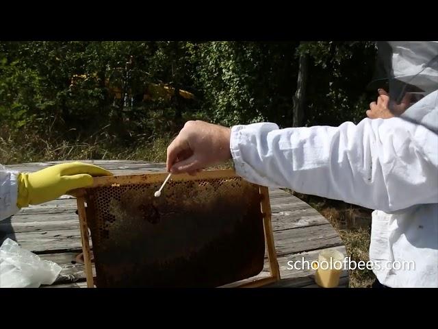 Honey Harvest Tasting