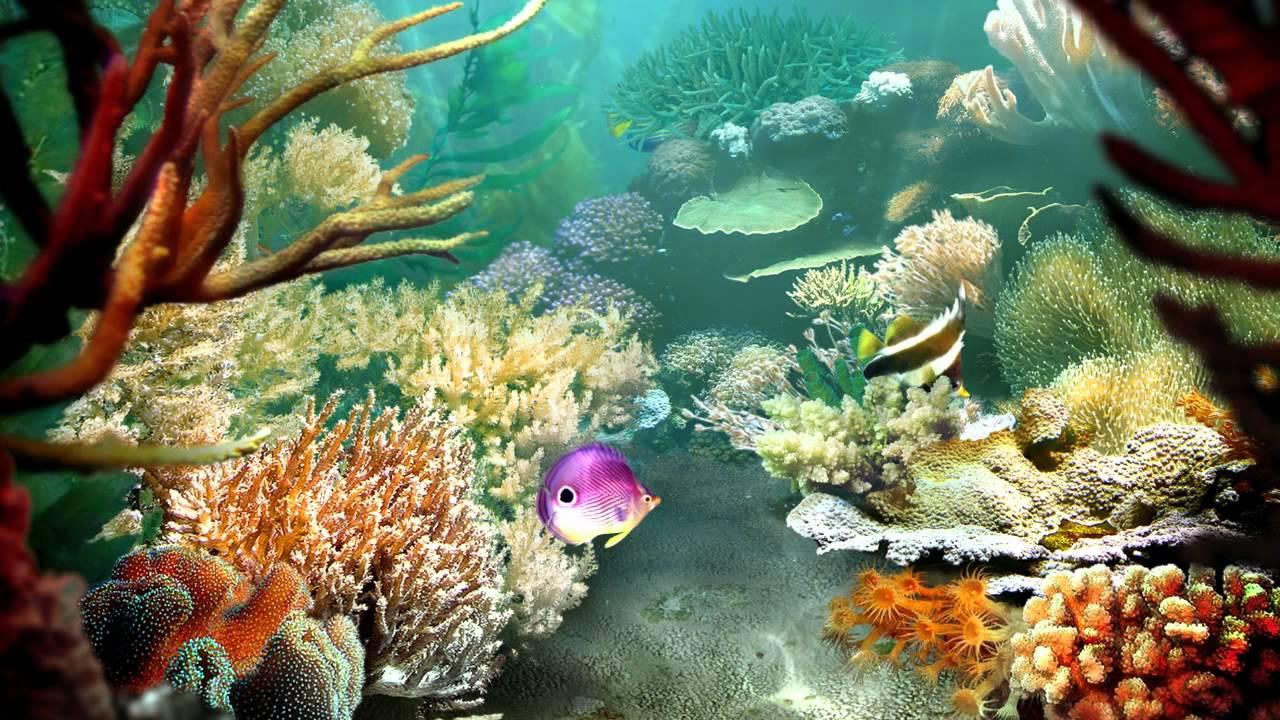 Tropical Fish 3D Screensaver  YouTube