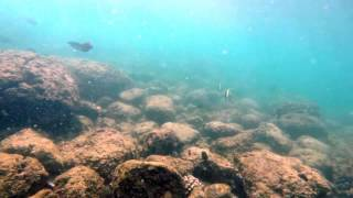 Haleiwa, Hawaii: Under Water