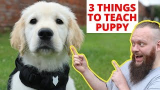 THE MOST IMPORTANT 3 THINGS TO TEACH YOUR PUPPY