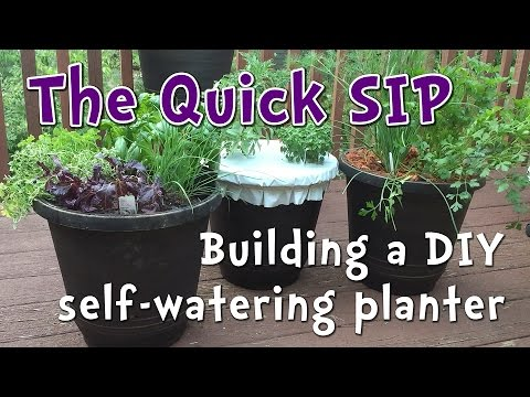 5 Minute Diy Self Watering Container Garden Perfect For Beginner Gardeners And Small Es